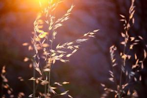 Nadchodzi zima - dlaczego warto wybrać ogrzewanie na podczerwień?