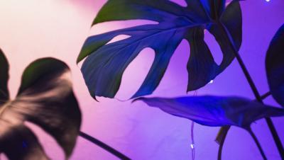 Oświetlenie do roślin LED – wszystko o doświetleniu roślin