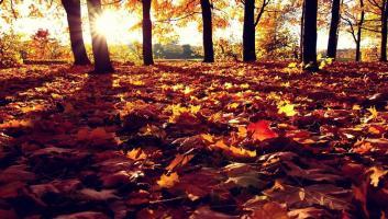 Przegląd modnych lamp w kolorach jesieni