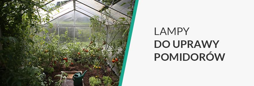 Lampy do uprawy pomidorów
