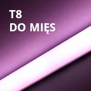 Świetlówki T8 DO MIĘS